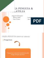 OLEA PINGUIA & VOLATILIA