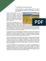 BoletinInformativoEcotiposyVariedades (4)