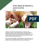 Relación entre tasas de desecho y cuidados para la cerda reproductora