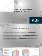 MUSCLES OF THE LOWER EXTREMITY VOL 2.pptx