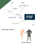 13 (physiology of bones)