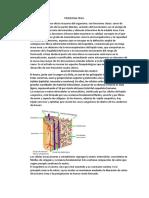 FISIOLOGIA OSEA 2