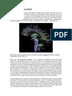 El Conectoma cerebral