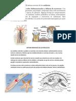 El sistema nervioso de los moluscos