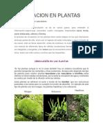 CIRCULACION EN PLANTAS