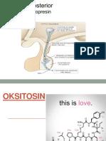 OKSITOSIN & VASOPRESIN