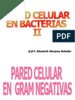 Pared celular_bacteriasII