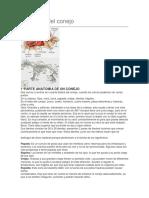Anatomía del conejo.docx