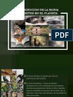 distribución de la fauna silvestre en el planeta