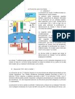 Activación Linfocitaria (2)