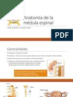 1580250322625_Clase 2 - Medula.pptx