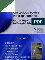 ContagiousBovinePleuropneumonia