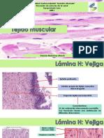 tejido muscular (práctica)