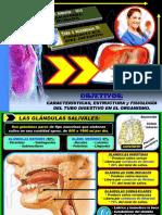 Fisiología DIGESTIVA - 2019