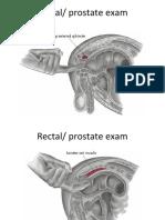 Rectal and Genital Examination 2