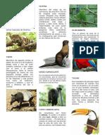 10  animales en peligro de extincion JAGUAR.docx