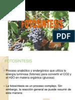 FOTOSINTESIS_RESPIRACION_CELULAR
