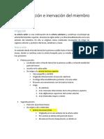 Vascularización e inervación del miembro superior