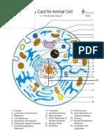 B102 Animal cell flagged color.pdf