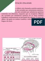 Aula Anatomia e Fisiologia da Gustação e Olfação