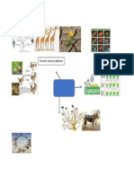 biologia mapa