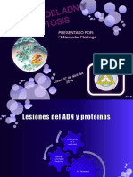 Apoptósis.pptx