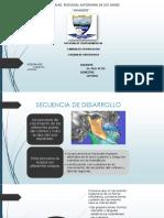 CRECIMIENTO Y DESAROLLO.pptx