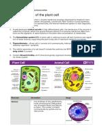 Plant organology theory .pdf