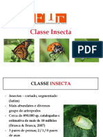 Aula 9 - Classe Insectaa