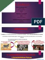 EL CABALLO EXPOSICIÓN.pptx
