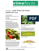 Western-flower-thrips-and-tomato-spotted-wilt-virus