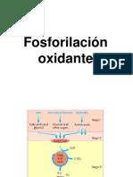 8.1FOSFORILACIONOXIDANTE_24478.pdf