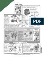 Ailanthus Science Factsheet