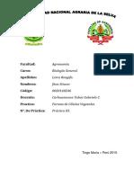 FORMAS DE CELULAS VEGETALES