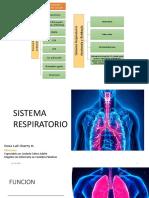 13. Sistema respiratorio generalidades