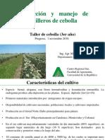 producción de semilla cebolla