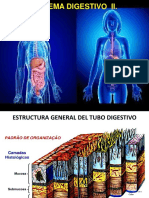 Unidad 4. Tubo digestivo (II)