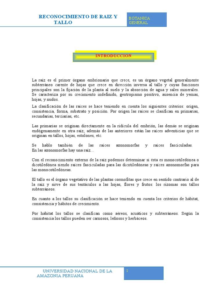 informe 4 de botanica