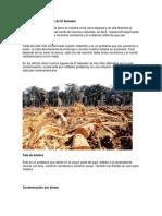 trabajo 1 octubre problema ecologico