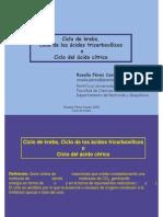 311809083-Bioquimica-II.pdf - Ciclo del ácido cítrico..