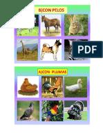 Animales con plumas, escamas y pelo