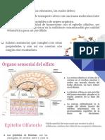 OLFATO.pdf