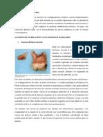 MALPOSICION.docx