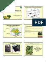 cultivo de abacate