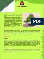 136722398-Bonsai-di-pino-pdf.pdf