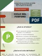 CICLO DEL FOSFORO E IMPORTANCIA MEDICA