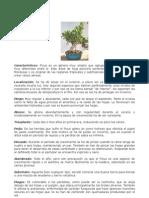 Ficus Cast