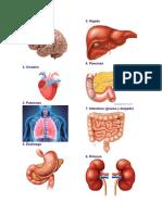 10 partes del cuerpo humano, puntos cardinales