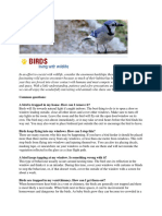 City of London Animal Care Centre guidelines for birds