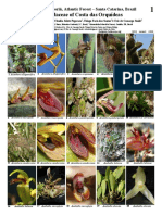 1011_brazil_orchidaceae_of_costa_das_orquideas(1).pdf